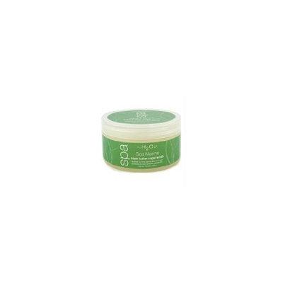 H2O+ Sea Marine Triple Butter Sugar Scrub for Unisex, 11.5 Ounce