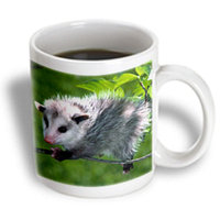 Recaro North 3dRose - Wild animals - Opossum - 11 oz mug