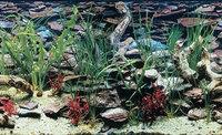 Penn Plax Aquarama / Shalescape Aquarium Background: 19