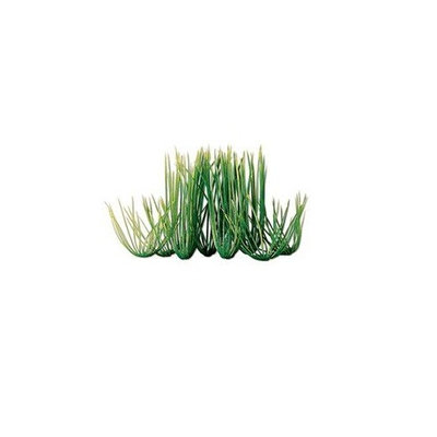 United Pet Group Tetra Water Wonders Hairgrass Plant 12in