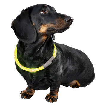 Bow & Arrow Rechargeable LED Light Up Pet Band - Yellow (Adjustable Size)