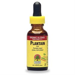tures Answer Plantain Leaves Extract 1 Fl Oz from Nature's Answer