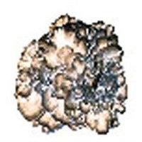 Eclectic Institute, Mycetobotanicals, Maitake, 60 Veggie Caps