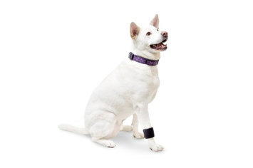 Walkin' Wheels Dog Wrist Wrap Size: Small