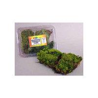 Nature Zone Terrarium Flora - Frog (Mood) Moss