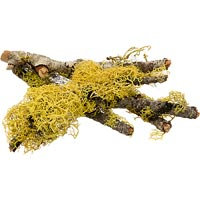 T-Rex Terra Accents Lichen Sticks (Assorted)