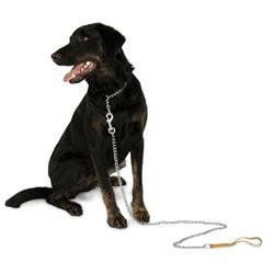 Doskocil - Aspen Pet 20in. x 3mm Heavy Weight Mighty Link Chain Collar 82320