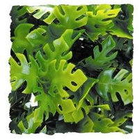 Zoo Med Laboratories - Plant - Amazon Phyllos- Green Small - BU-11