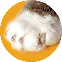 Soft Claws Nail Caps for Cats 40ct