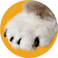 Soft Claws Black Medium 9-13 LBs Cat Nail Caps