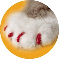 Soft Claws Red Cat Nail Caps (Medium; Pack of 40 caps; For Cats 9-13 lbs.)