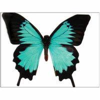 Paper House Diecut Card Butterfly Mountain Blue