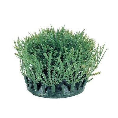 Hagen Marina Rootscaper Willow Moss Plant, 2-Pack
