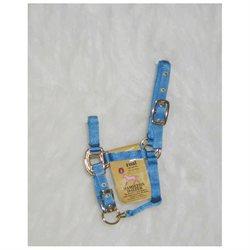 Hamilton Pet Company Hamilton Halter Company - Adjustable Chin Halter- Berry Foal - 3DA FLBY