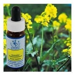 Flower Essence Services - Healing Herbs Dropper Mustard - 0.25 oz.