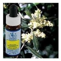 Flower Essence Services - Healing Herbs Dropper Olive - 0.25 oz.