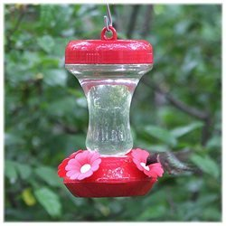 Perky Pet 8 oz. Glass Top Fill Hummingbird Feeder