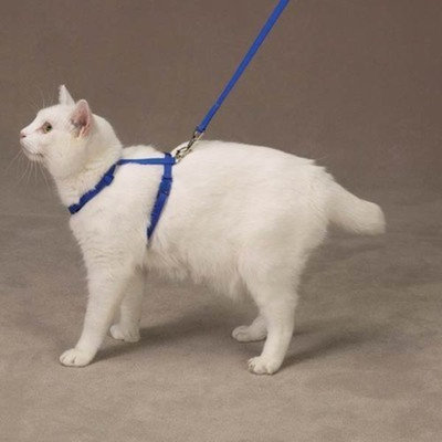 Savvy Tabby Nylon Cat Lead