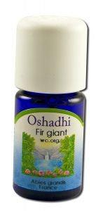 Oshadhi - Essential Oil Singles, Fir, Giant 5 mL