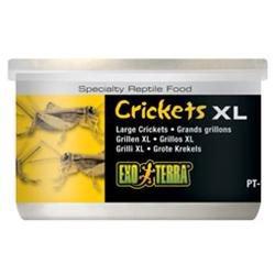 RC Hagen PT1962 Exo Terra Crickets, Large Size, 1.2 oz