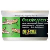 RC Hagen PT1952 Exo Terra Extra Large Grasshoppers, 1.2 oz