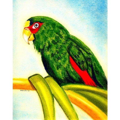 Olde Time Mercantile White Fronted Amazon Parrot Bird Portrait Matted Art Print - 5 in x 7 in Design - 8 in x 10 in Matted