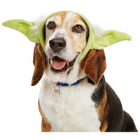 STAR WARS Yoda Dog Headband, Small/Medium ()