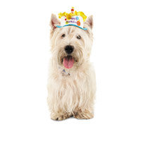 Petco Special Occasions Birthday Dog Hat, X-Small/Small