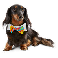 Petco Special Occasions Dog Birthday Bowtie, M/L