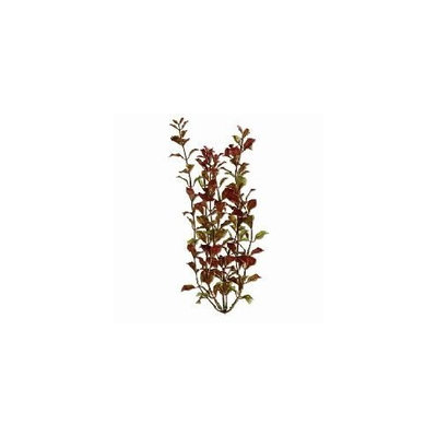 United Pet Group Rotala Aquarium Plant, 9