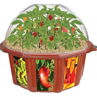 Dunecraft Hot Pepper Plant Kit Ages 4 and up