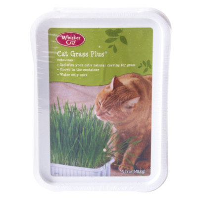Whisker CityA Grass Plus Tub Cat Grass