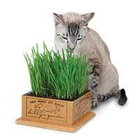 Smart Cat 3844 Kitty's Garden - Case of 4