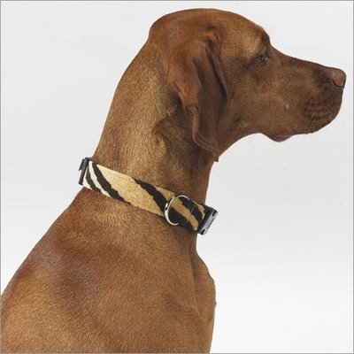 Bowsers Dog Collar in Safari Microvelvet Size: Medium