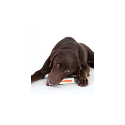 Petstages Beyond Bone Synthetic Chew Dog Toy