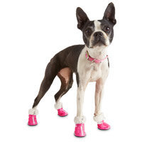 Petco Pup Crew Quilted Zip Dog Shoes, X-Small