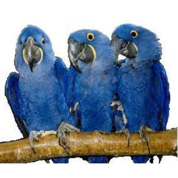 Pollys Pet Products Bird Supplies Full Length Hardwood Perch 30