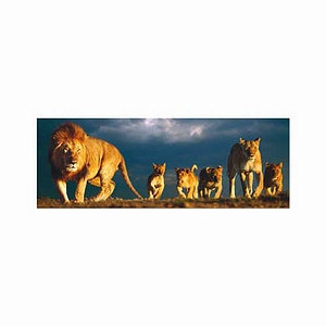 Educa Lion Family Panorama Series Puzzle: 1000 pc Ages 12 and up
