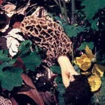 Fungus Among Us Organic Morel Mushrooms (2x1.0oz)