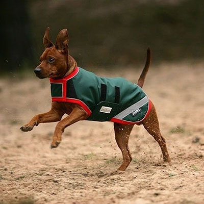 Rambo by Horseware Dog Blanket