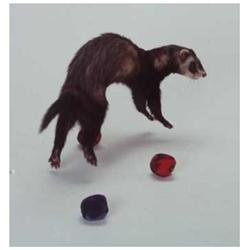 Marshall Pet Products FT-154 Ferret Bell Toy