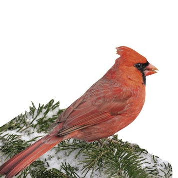 Paper House Production Paper House RED CARDINAL