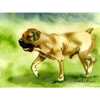 Olde Time Mercantile Boerboel Dog Portrait Matted Art Print - 5 in x 7 in Design - 8 in x 10 in Matted