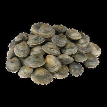 Chincoteague Shellfish Farms NY Littleneck Clams - 50 CT