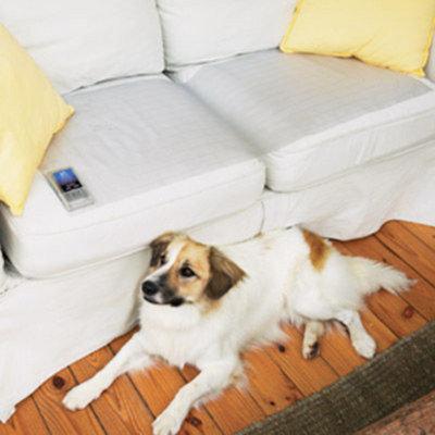 PetSafe ScatMat Pet Training Mat
