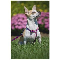 Lupine Pet 746889747826 Wing It 9 In-14 In. Roman Harness