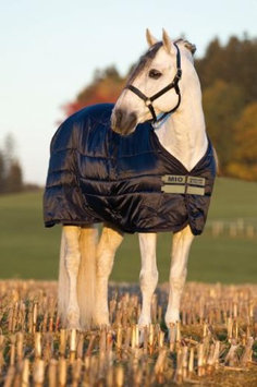 Amigo Mio Medium Stable Rug Double