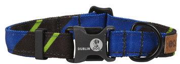 Dublin Dog Lucks Ivy League