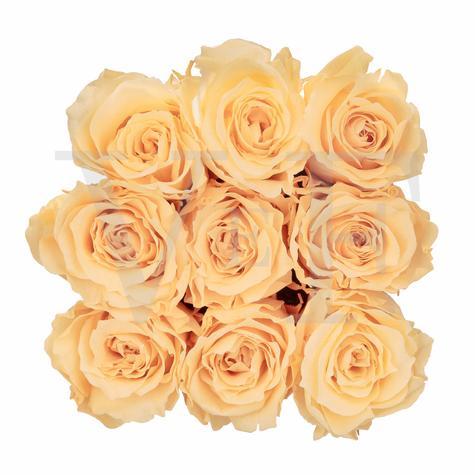 Venus ET Fleur™ Lé Mini™ Square Mini Roses