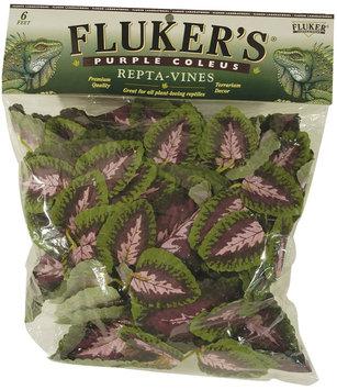 Fluker Labs Fluker DECOR REPTA VINE PR COLEUS